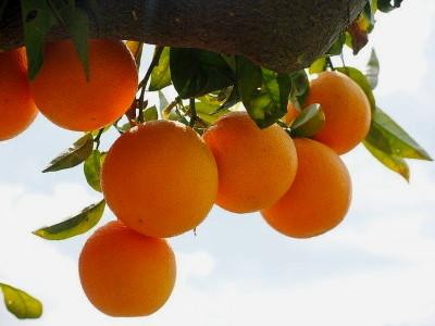 Mennyi c vitamin vagy egy narancsban