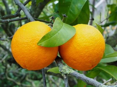 Milyen vitamin van a narancsban