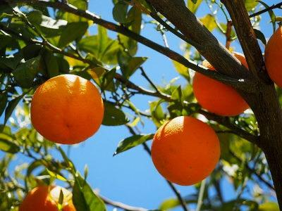Mire jó a narancs