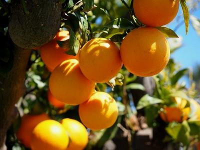 Narancs ch tartalma