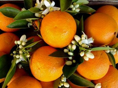 Narancs jótékony hatása