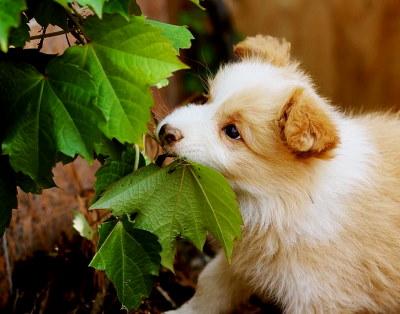 Narancs kutyának