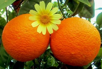 Narancs savas vagy lúgos