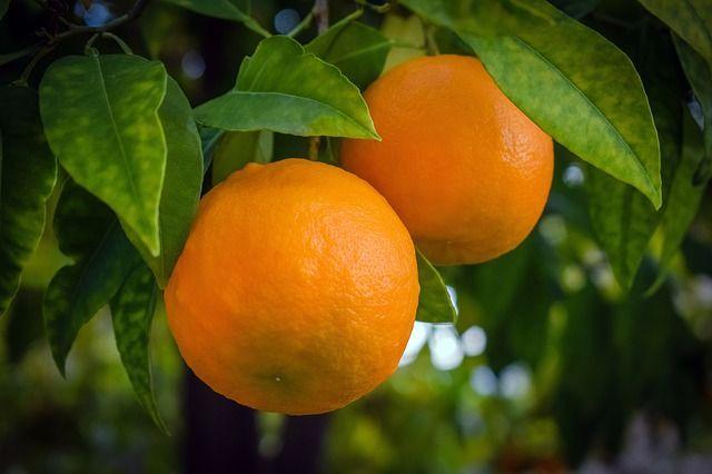 Narancs vitamin