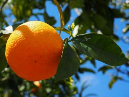 Narancs vitamin és ásványianyag tartalma